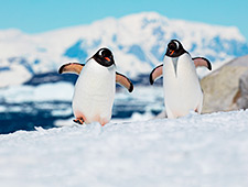 Antarctica 2020 expeditiecruise - 14 dagen
